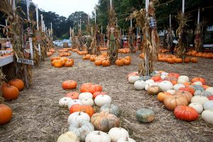 Don't Miss These DFW Pumpkin Patches