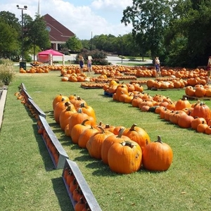 pumkin patch grapevine first methodist